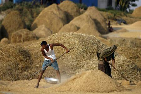 Rice production reaches 34.449 million tons in FY 2013-14