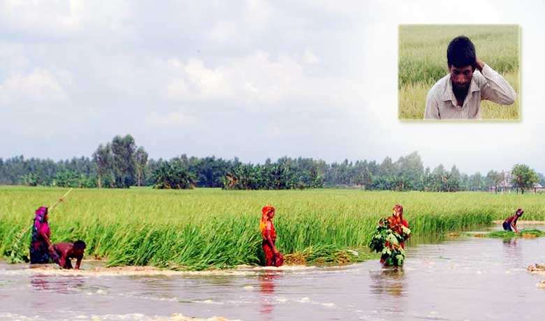 13 lakh farmers hit by floods in Bogra