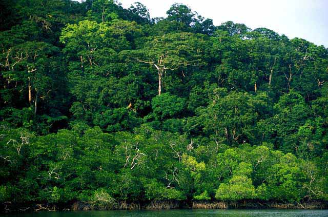 Fears for tribes, forests as India eyes Andaman expansion