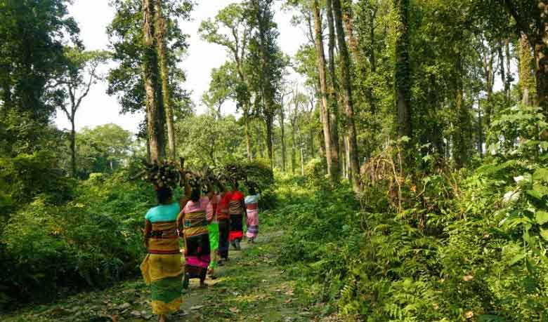 18-member taskforce to protect forest resources