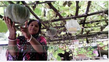 মনিরামপুরে নিরাপদ সবজি উৎপাদনে বিপ্লব