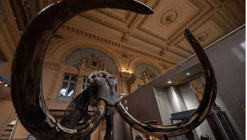 Woolly mammoth skeleton sold for 548,000 euros