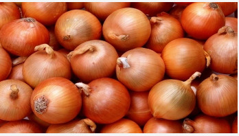 Onion can help fight TB antibiotic resistance