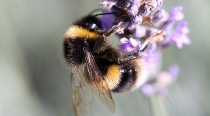 Pesticides put bees at risk