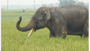 রোহিঙ্গা ক্যাম্পে বন্যহাতির হামলা, রোহিঙ্গা পদপিষ্ট