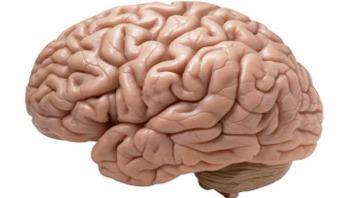 Scientists urge more brain donation