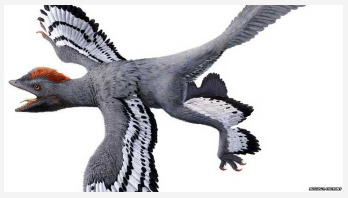 'Best ever' view of dinosaur revealed