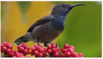 Restoring native plants 'boosts pollination'