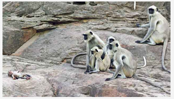Monkeys communicate with a robot