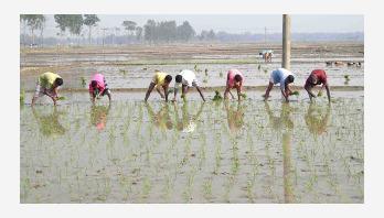 Let Boro season fill with crops