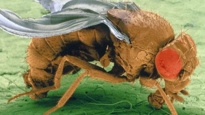 Warming world harming insects' reproduction