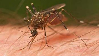 3700 doctors get training to prevent Chikungunya