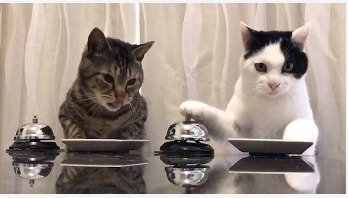 Cats ring bell for their foods (video)