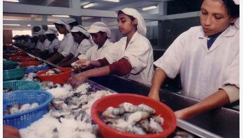 ১১ মাসে মাছ রপ্তানিতে ৩৮৩৭ কোটি টাকা আয়