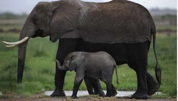 Humans blamed for mass wildlife loss