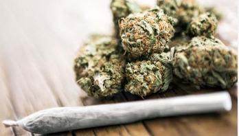 Cannabis more harmful than alcohol for teen brains