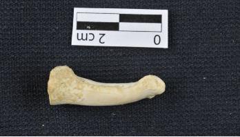 New human species found in Philippines