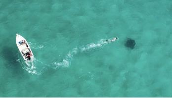 Satellites used to protect endangered sharks