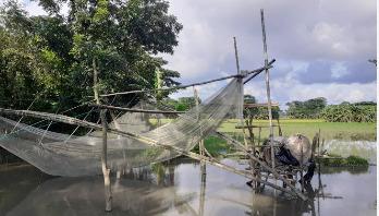ভেসাল জাল: খাল-বিলে মাছ ধরার বিশেষ ফাঁদ