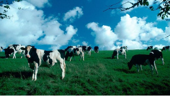 Pledge to cut emissions from dairy farms