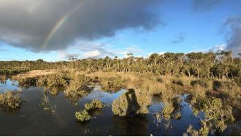 Wetland mud is secret weapon against climate change
