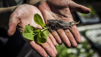 Genetically modified 'shortcut' boosts plant growth by 40%
