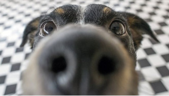 Dogs can smell epileptic seizures