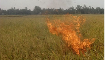 PM directs probe into paddy field fire incident