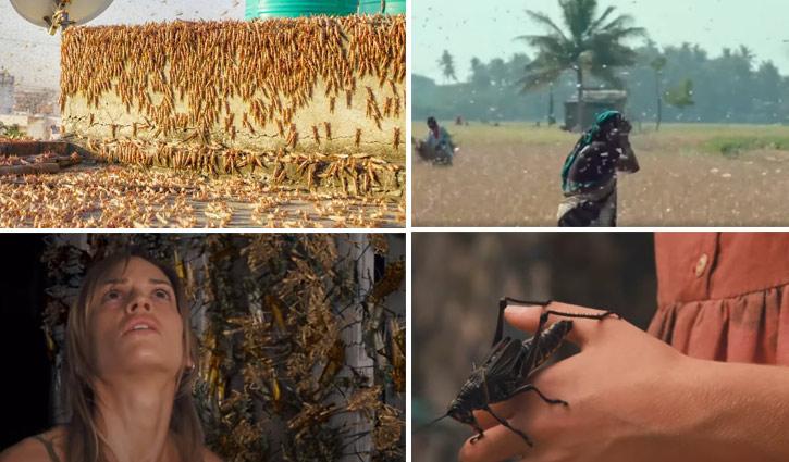 পঙ্গপালের হানা: সিনেমার গল্পই বাস্তবে রূপ নিয়েছে! (ভিডিও)