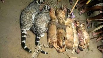 জৈন্তাপুরে বন্য প্রাণী হত্যার ঘটনায় মামলা
