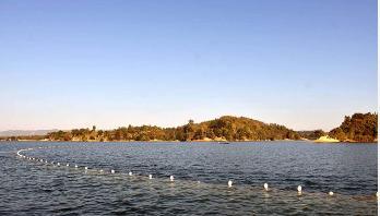 কার্প জাতীয় মাছের উৎপাদন বাড়ছে না কাপ্তাই লেকে