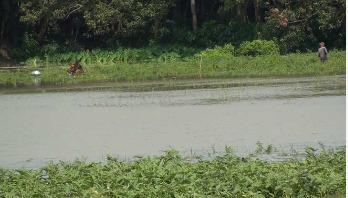 মানিকগঞ্জে যমুনার পানি বিপদসীমার নিচে