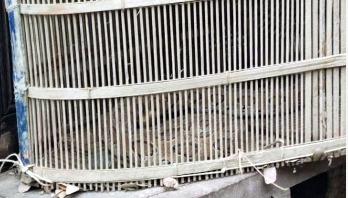 মুন্সীগঞ্জে মাছ ধরার ফাঁদে আটকালো রাসেল ভাইপার