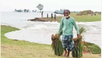 বোরো কাটা নিয়ে দুশ্চিন্তায় ৭ জেলার কৃষক
